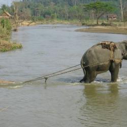Elefantes construyen un puente