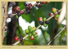 ¿Le apetece un café de Sumatra o varios?