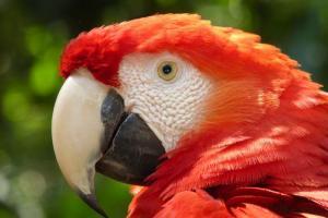 Santuario de aves Macaw Mountain